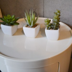 three-succulent-set