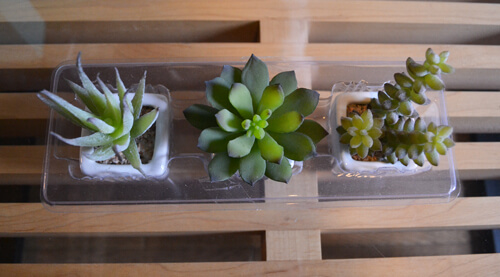 three-succulent-set3