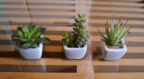 three-succulent-set4