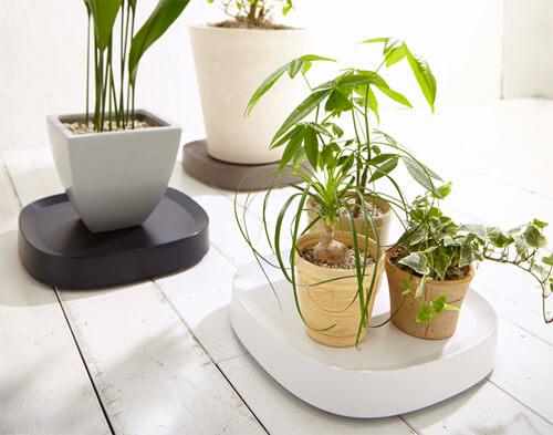 design-caster-tray