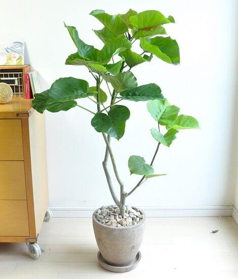 おしゃれなおすすめ観葉植物13選【インテリア】