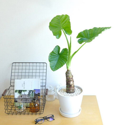 design-house-plant3