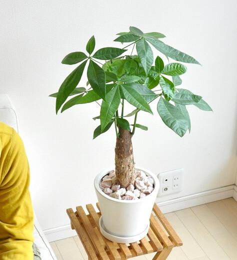 design-house-plant7