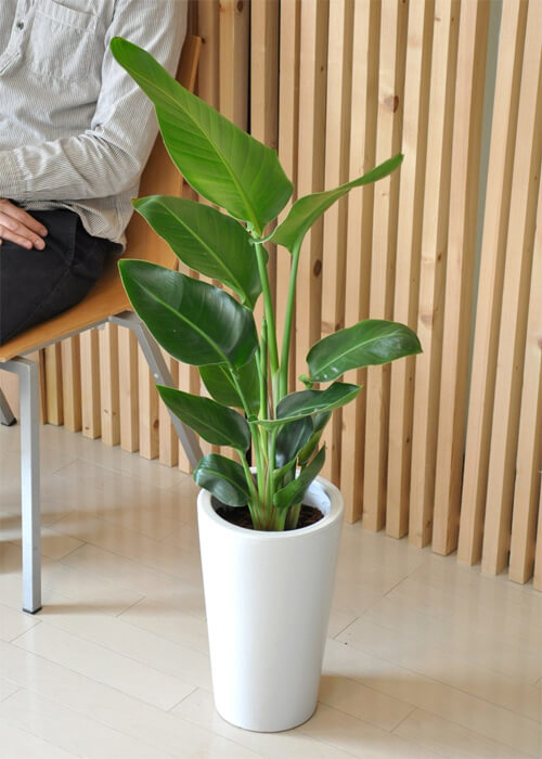 design-house-plant8