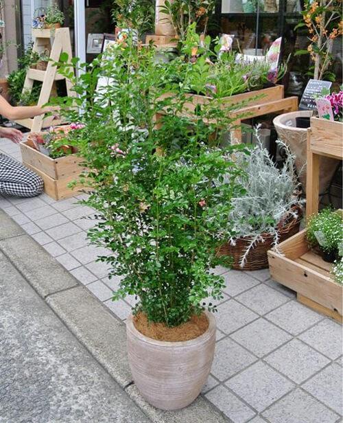 design-house-plant9