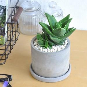 design-succulent-plant10