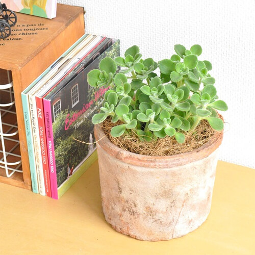 design-succulent-plant11