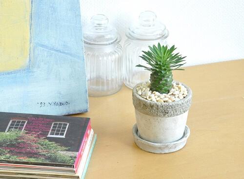 design-succulent-plant12