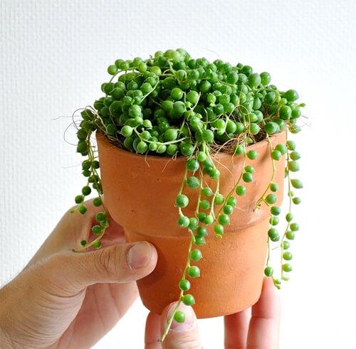 design-succulent-plant13
