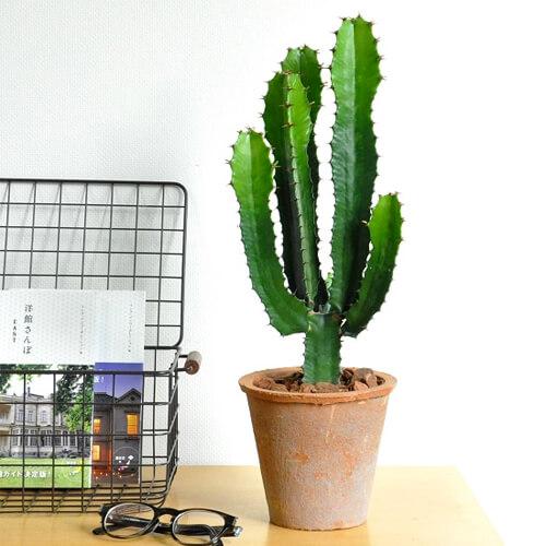 design-succulent-plant2