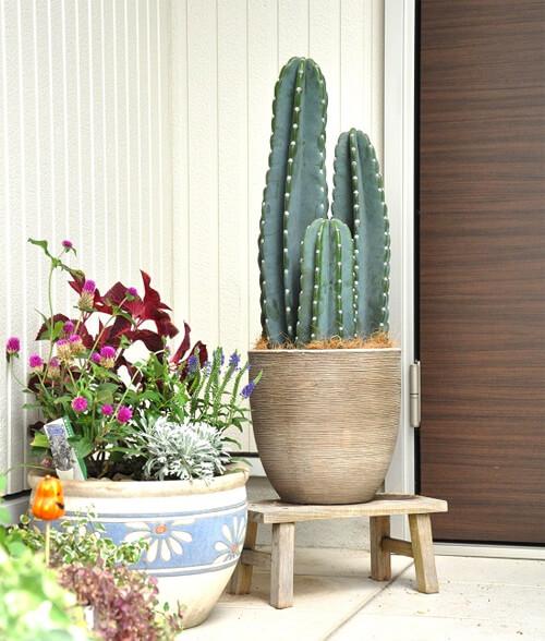 design-succulent-plant3