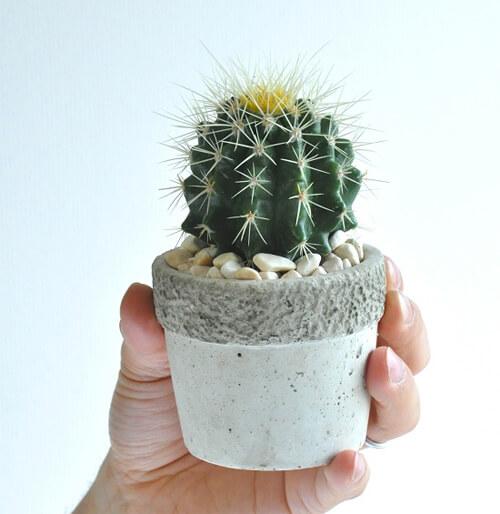 design-succulent-plant4