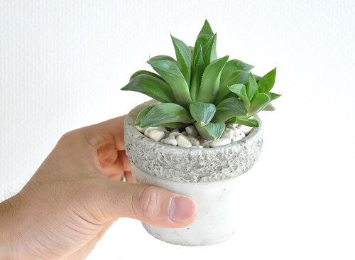 design-succulent-plant6