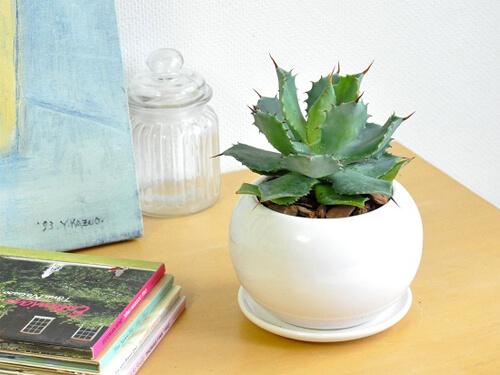 design-succulent-plant7