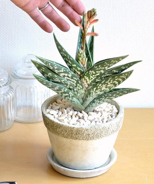 design-succulent-plant9